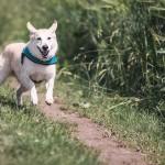 Pojemniki na psie odchody – czy warto je stawiać?